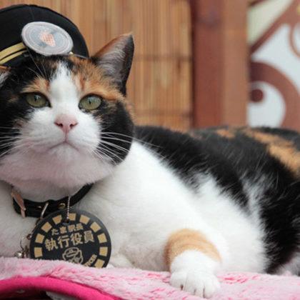 三毛猫駅長に会える和歌山ビギナーおすすめプラン
